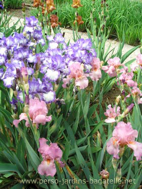 Le jardin des iris for Jardin hispano mauresque